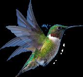 Colibri Wellness. Колибри является тотемом активной жизненной энергии, крепкого здоровья и благополучия