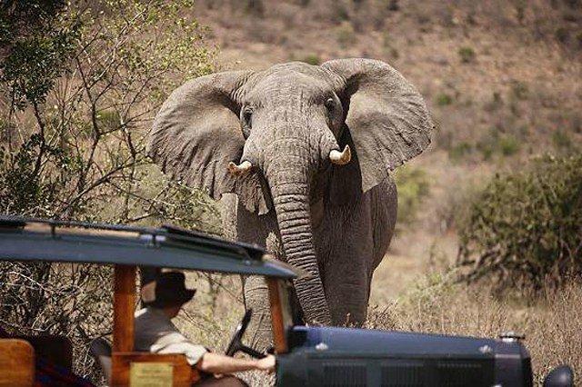 Туризм в Африке, сафари, огромный африканский слон.