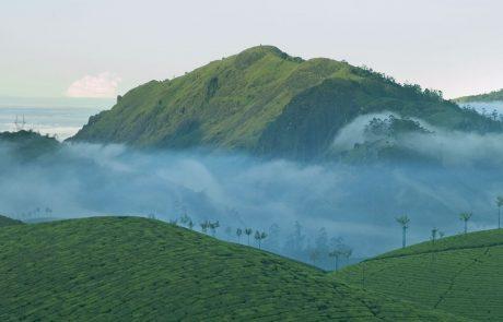 Чайные плантации в горах, Керала, Индия