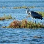 Наблюдение за птицами в Алгарве