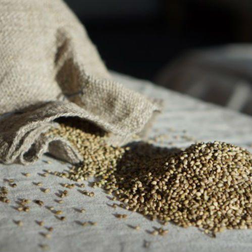 Семена конопли пищевые