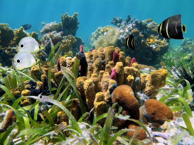 Морские губки на дне океана