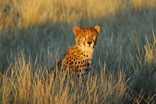 Сафари в Калахари - экотуризм Tswalu Kalahari