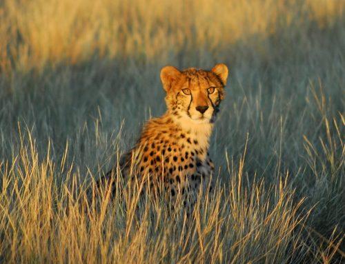Сафари в Калахари — экотуризм Tswalu Kalahari