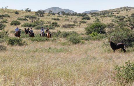 Сафари верхом на лошади в Tswalu Kalahari