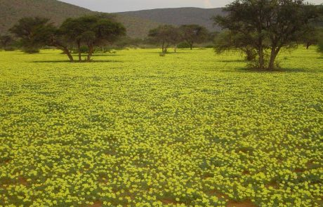Заповедник Tswalu Kalahari весной