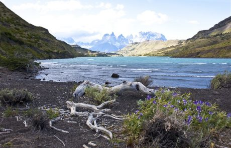 Озеро в Национальном парке Torres del Paine, Чили