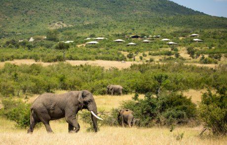 Лагерь Mara Bushtops, слоны
