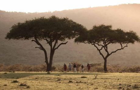 Сафари в Африке, пешком по саванне