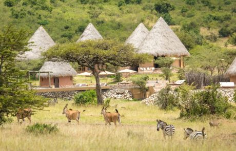 Лагерь Mara Bushtops, импалы и зебры
