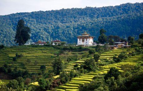 Террасные поля в Пунакхе, Бутан